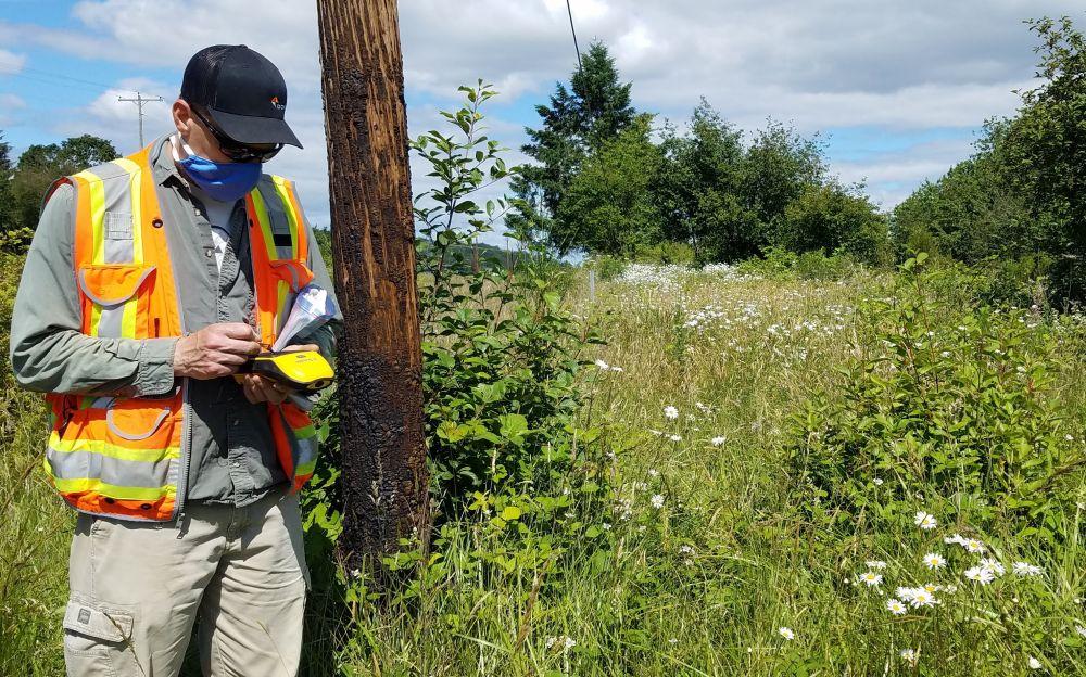 Looking at a wetland habitat